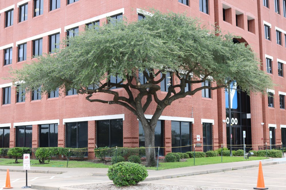 JRP Tree & Demolition: 3321 Almeda Genoa Rd, Houston, TX