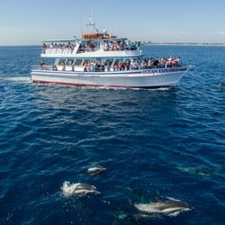Photo Of Davey S Locker Newport Beach Ca United States Whale Watching Trip