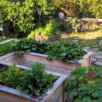 Photo Of Home Grown Gardens Berkeley Ca United States The Start