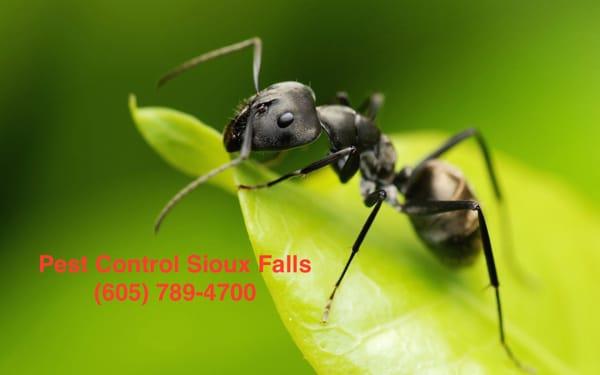 Pest Control Sioux Falls  Pest Control Sioux Falls - Sioux Falls, SD, United States. Best Sioux Falls
