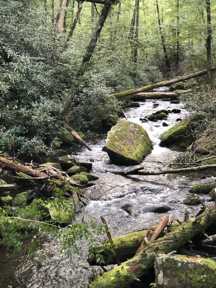 Joyce Kilmer Memorial Forest: 1133 Massey Branch Rd, Robbinsville, NC