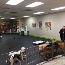 Photo Of Mind Your Manners Dog Training Daycare