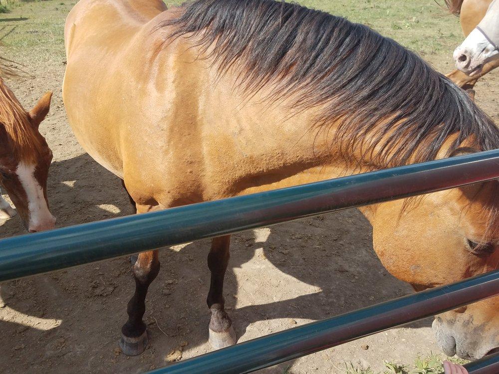 God's Family Ranch: 781 MO-131, Holden, MO