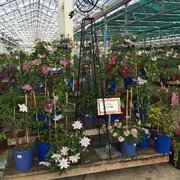 Displays For Summer Photo Of Petitti Garden Centers   Avon, OH, United  States.