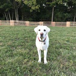 Heartlands Quality Labrador Retrievers - Pet Breeders