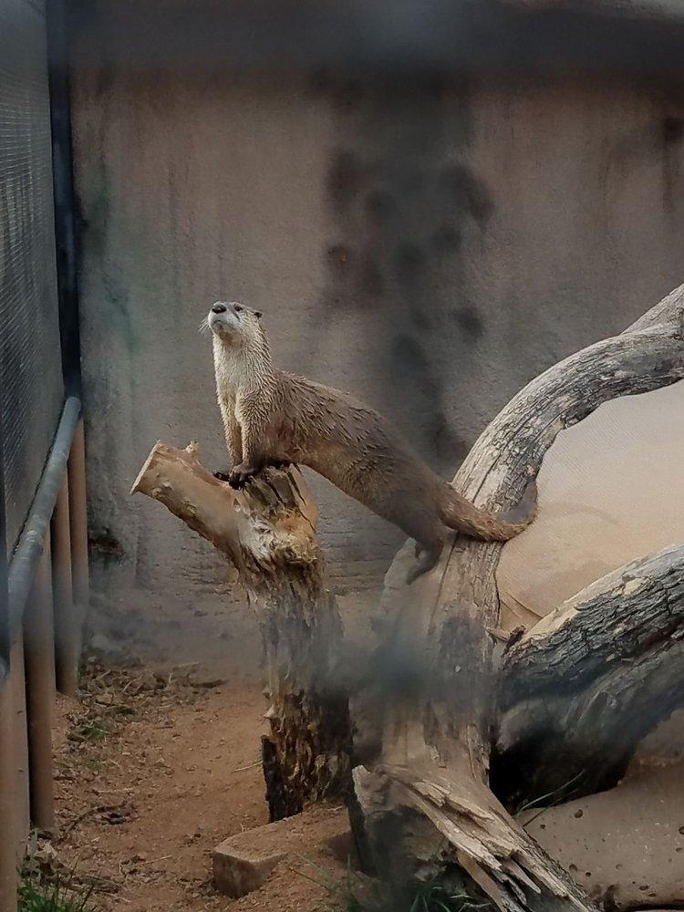 Out of Africa Wildlife Park: 3505 W SR- 260, Camp Verde, AZ