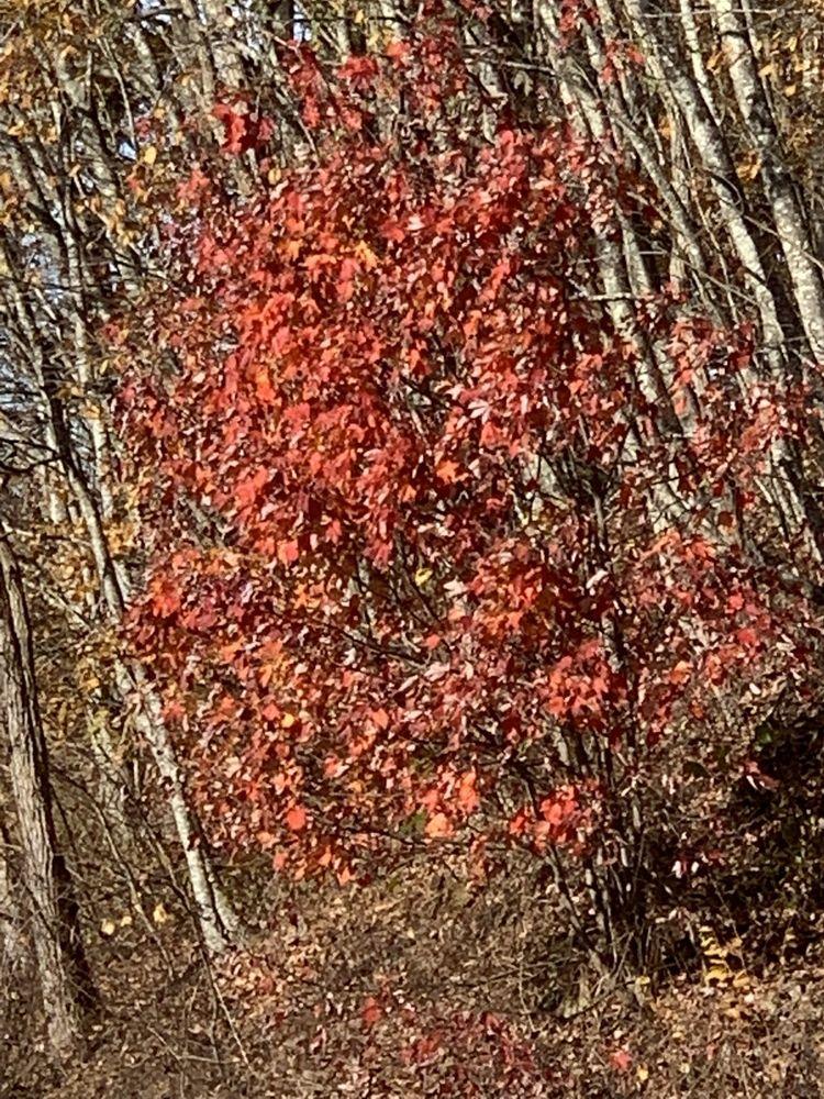 Big Walker Lookout: 8711 Stoney Fork Rd, Wytheville, VA