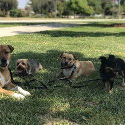 LA Dog Behaviorist - 17 Photos & 13 Reviews - Dog Walkers