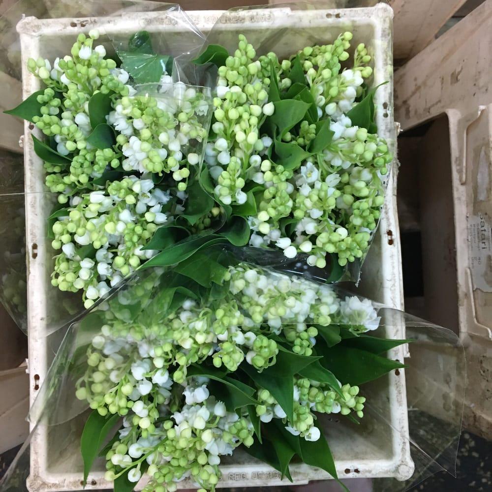 Dutch Flower Line Florists 148 W 28th St Chelsea New York Ny