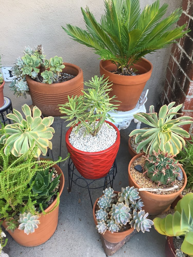 New Red Pot From Potted Looks Great In My Patio Yelp