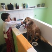 Animal house self service dog wash pet groomers 10121 w photo of animal house self service dog wash kennewick wa united states solutioingenieria Image collections
