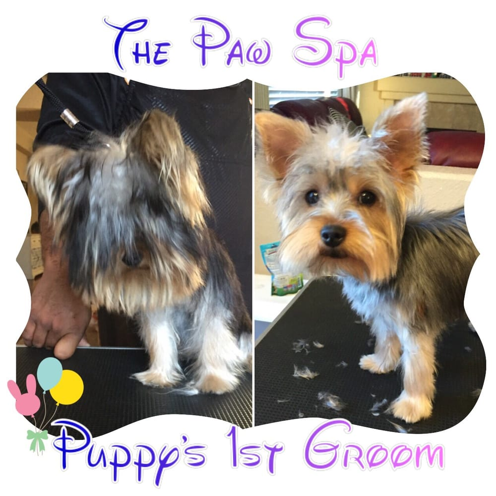 Puppy S First Dog Grooming Priced Start At 65 We Offer House