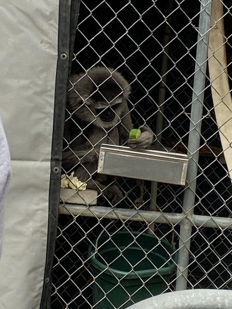 Gibbon Conservation Center: 19100 Esguerra Rd, Santa Clarita, CA