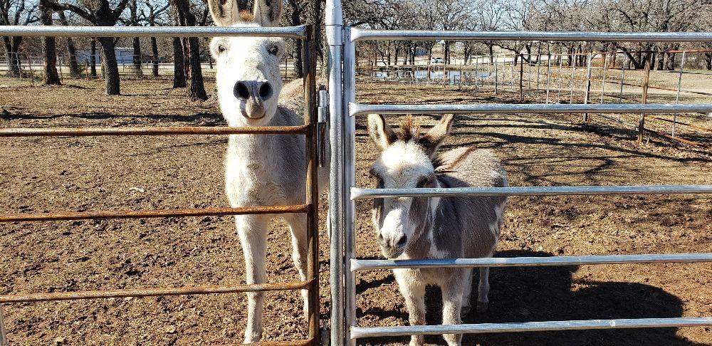 Manna Ranch Trail Rides: 4430 N US Hwy 287, Alvord, TX