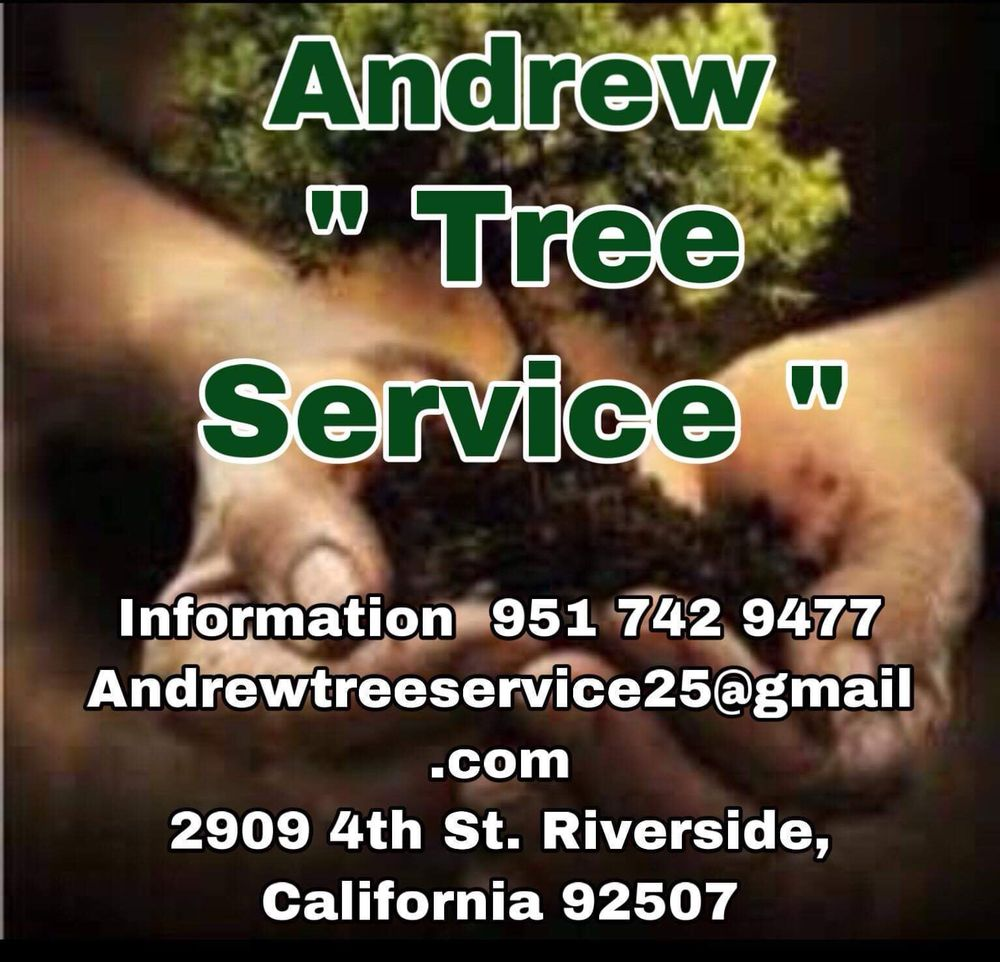 Andrew Tree Service: 2909 4th St Riverside, Riverside, CA