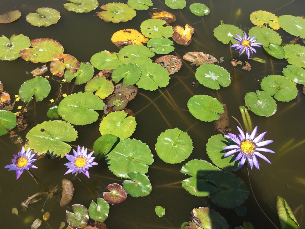 Sonoran Water Gardens: 13134 W Scorpio Ave, Silverbell, AZ