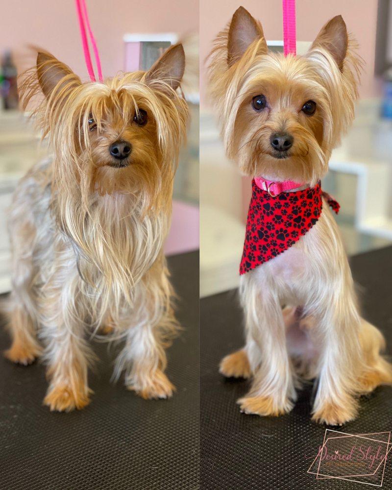 Desired Styles Pet Grooming: 8304 Limonite Ave, Jurupa Valley, CA