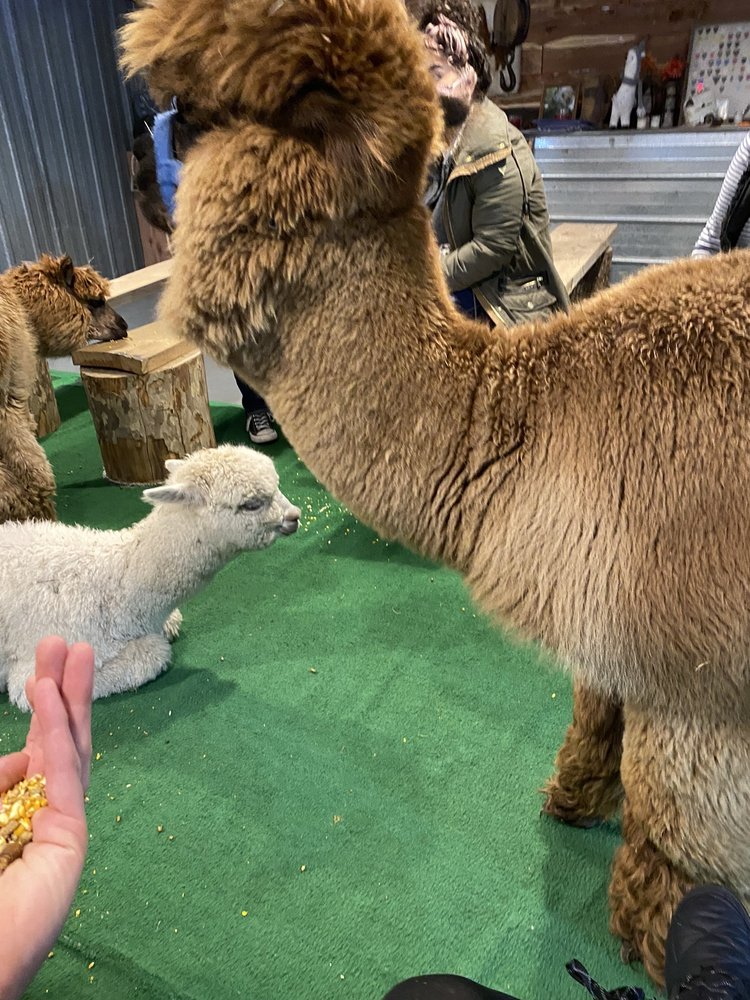 YaYa's Alpaca Farm: 30200 East 275th St, Garden City, MO