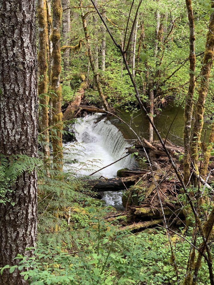 Falls Creek Falls: 15 Miles N Carson, Carson, WA