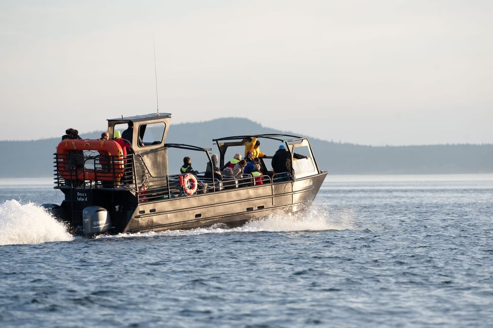 Bellingham Whale Watching by Outer Island Expeditions: 2557 Lummi View Dr, Bellingham, WA