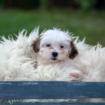 Patty's Pups - 45 Photos & 22 Reviews - Pet Services - 5045