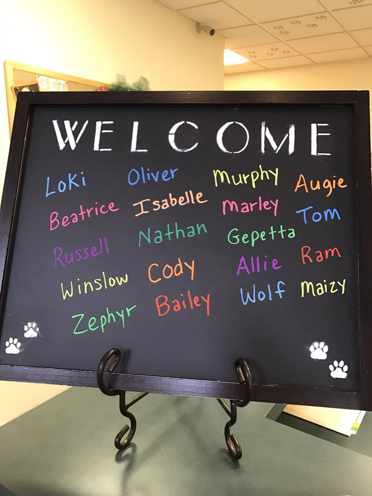 Harlingen Veterinary Clinic: 10 Sunset Rd, Belle Mead, NJ