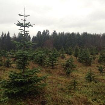 Fish creek tree farm christmas trees 18420 3rd ave ne for Fish in a tree summary