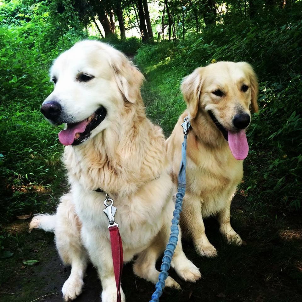 Creature Comforts Pet Sitting: Ardmore, PA