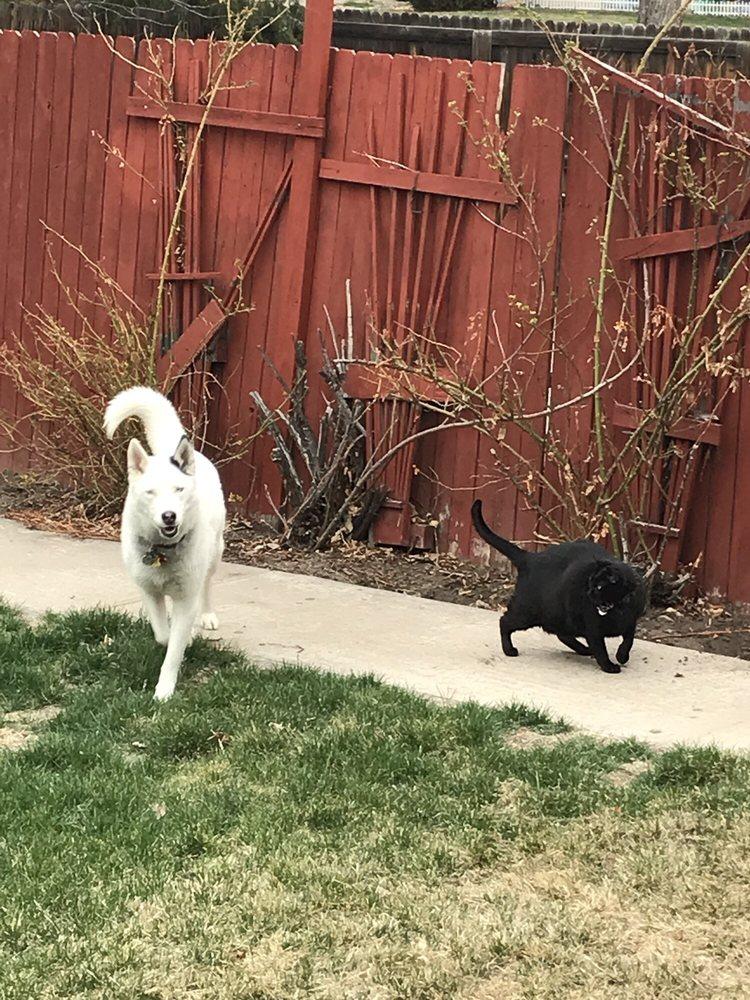 Breezy Pet Care: 8800 W 116th Cir, Broomfield, CO