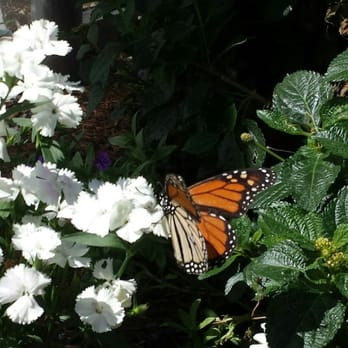 Merveilleux Photo Of Butterfly Farms   Encinitas, CA, United States