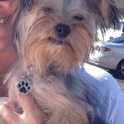 Photo Of Debu0027s Doggie Door   Las Vegas, NV, United States. Murphy Looks