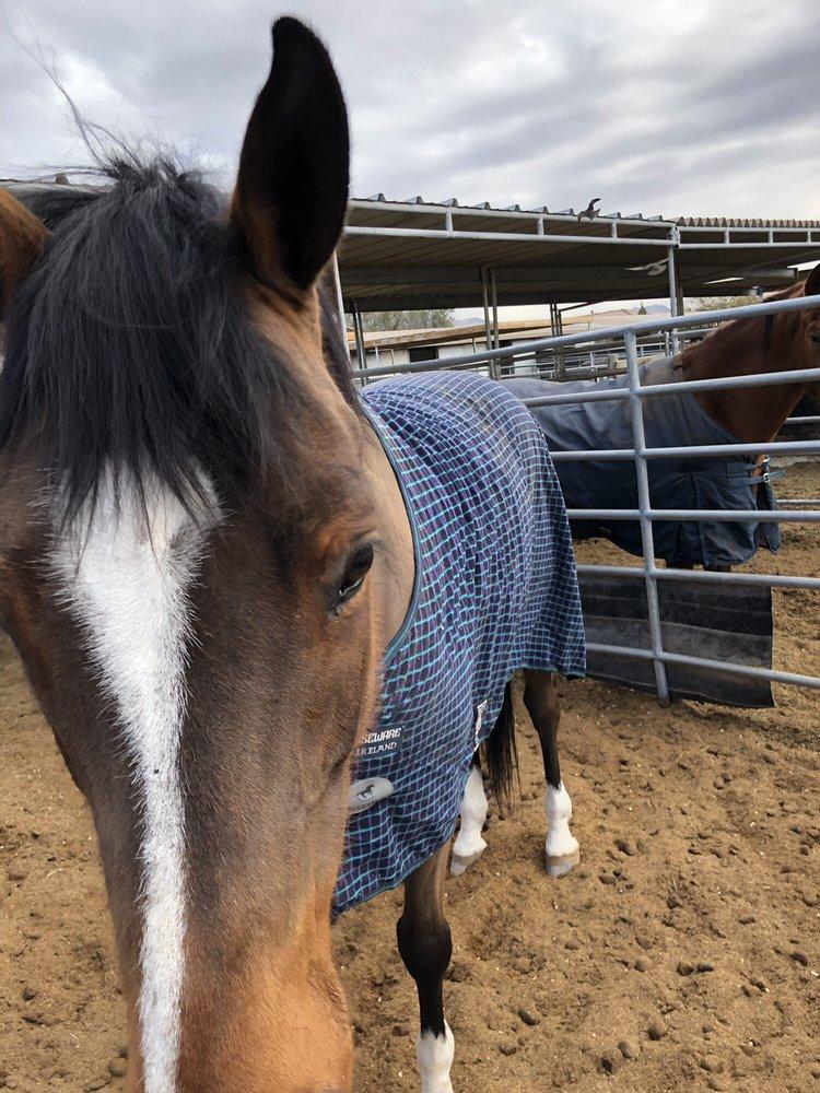 Debra's Equine Massage: Las Vegas, NV