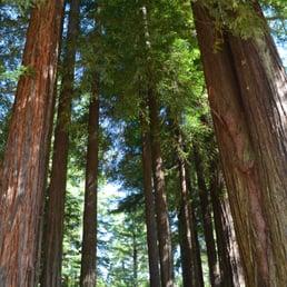 Giant Redwoods Rv Amp Camp 109 Photos Amp 126 Reviews