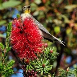 Photo Of San Luis Obispo Botanical Garden   San Luis Obispo, CA, United  States