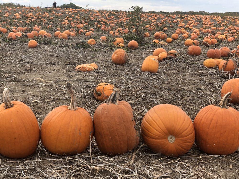 Dehn's Pumpkins: 17270 125th Ave N, Dayton, MN