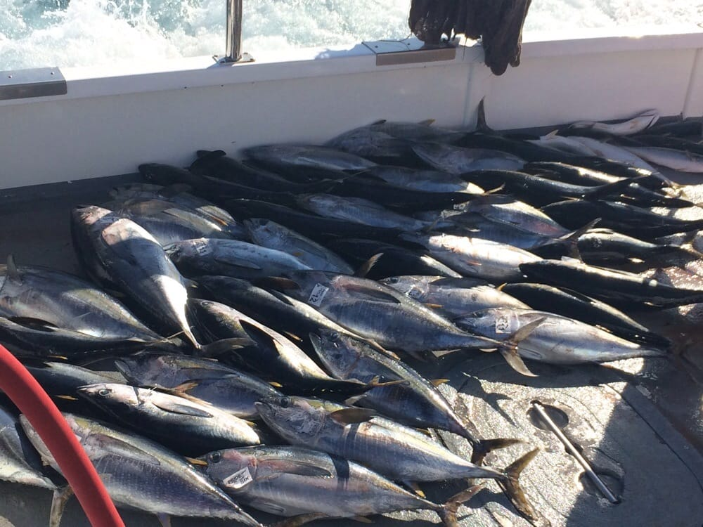 75 yellow fin 10 dorado thanks to the pride yelp for Seaforth landing fish report