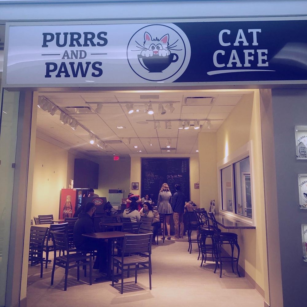 Purrs And Paws Cat Cafe: 7979 Pittsford Victor Rd, Victor, NY