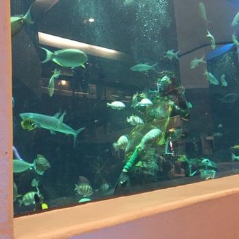 Photo Of The Oceanarium Honolulu Hi United States Feeding Fish