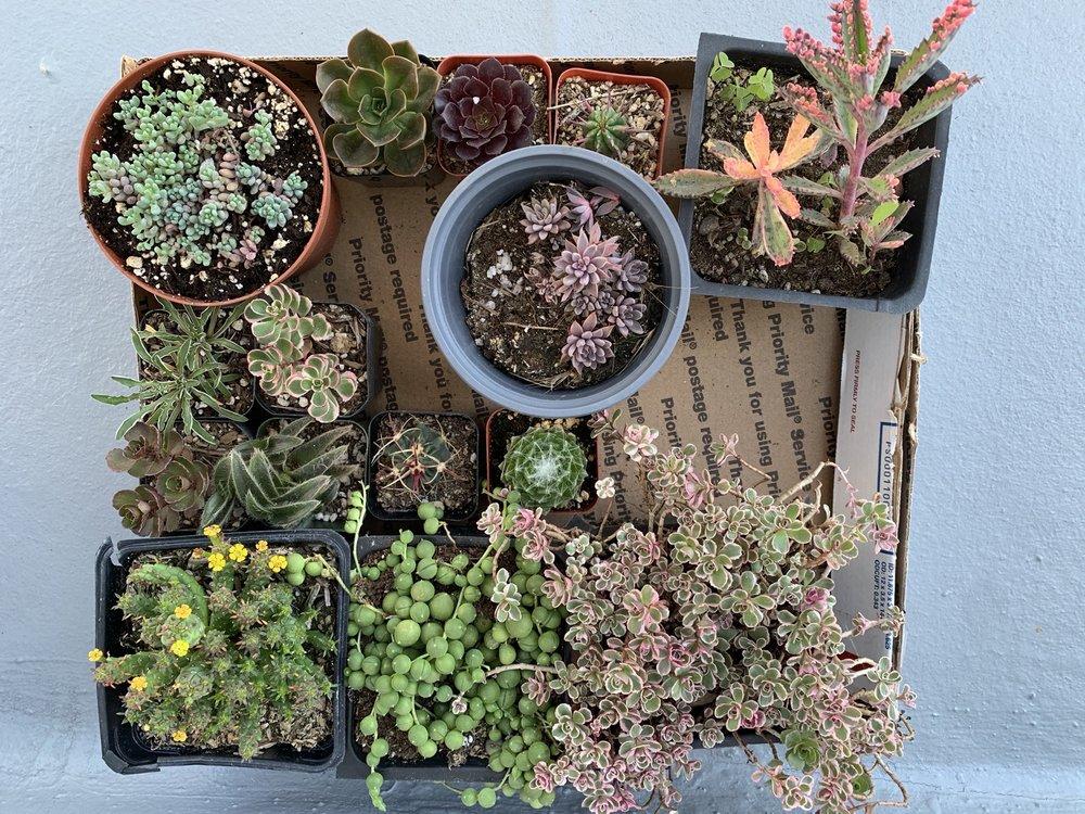 Aeonian Verde Nursery: 6232 Clara St, Bell Gardens, CA