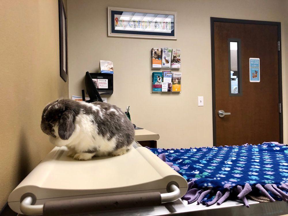 Arlington Veterinary Hospital: 7728 204th St NE, Arlington, WA