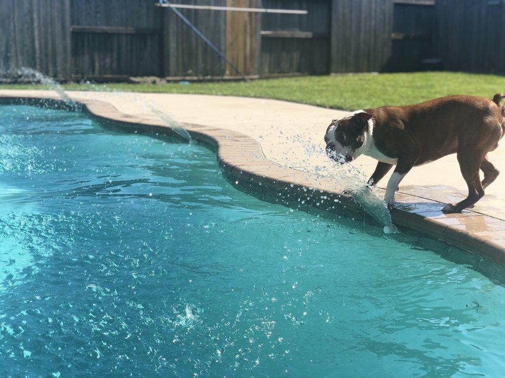 Pool Porters: Baytown, TX