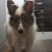 Petland Jacksonville - 2019 All You Need to Know BEFORE You