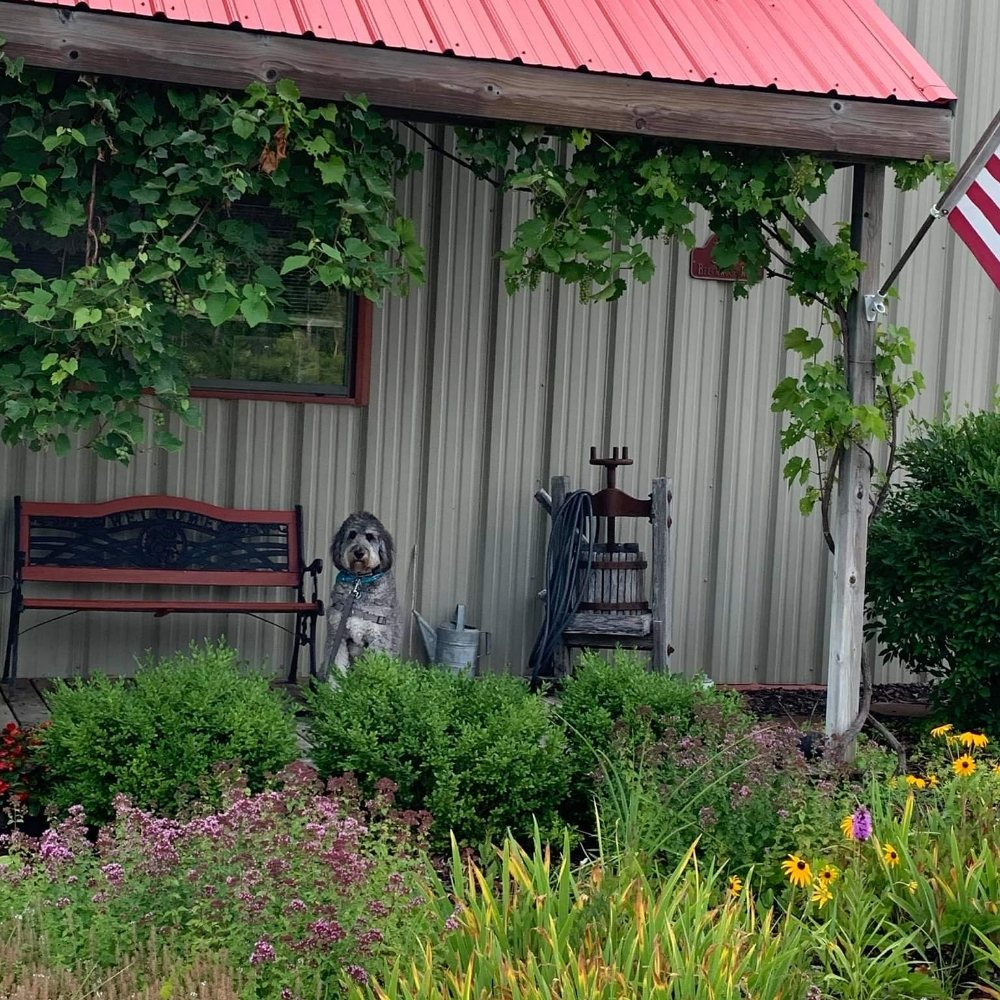 Rose Valley Winery: 3039 Beechwood Rd, Rose City, MI