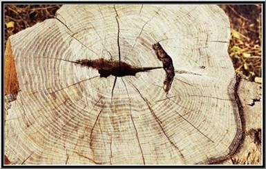 Yoos Tree Service