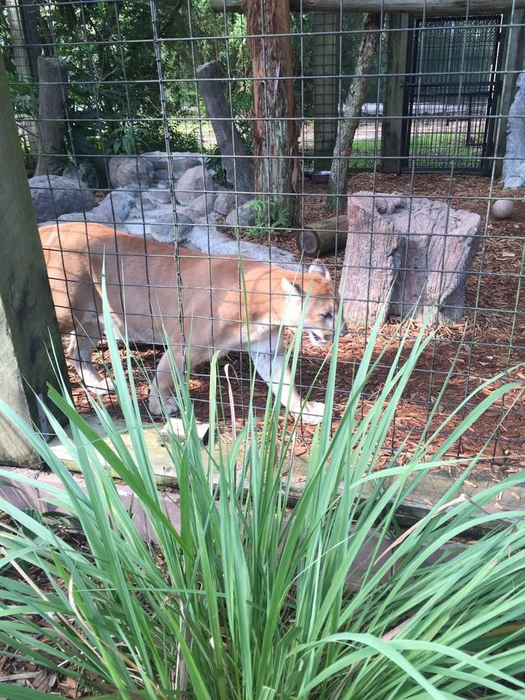 Central Florida Zoo Botanical Gardens 89 Photos Zoos