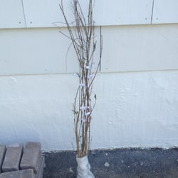Photo Of Summerstone Nursery Mcminnville Tn United States The Twigs They Were