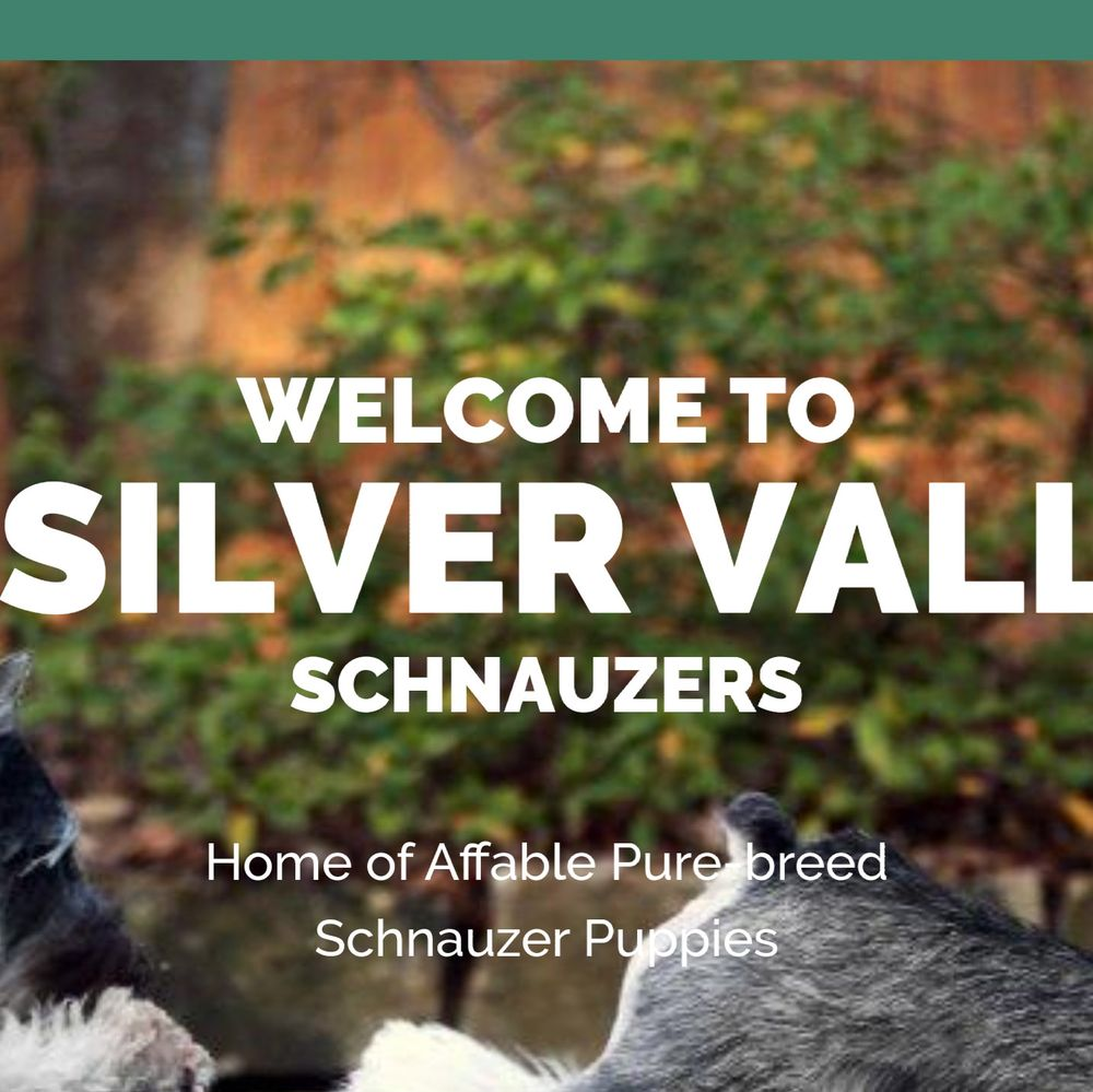 Silver Valley Schnauzers: Silver Valley, NC