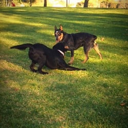 Camarillo Ca Dog Park