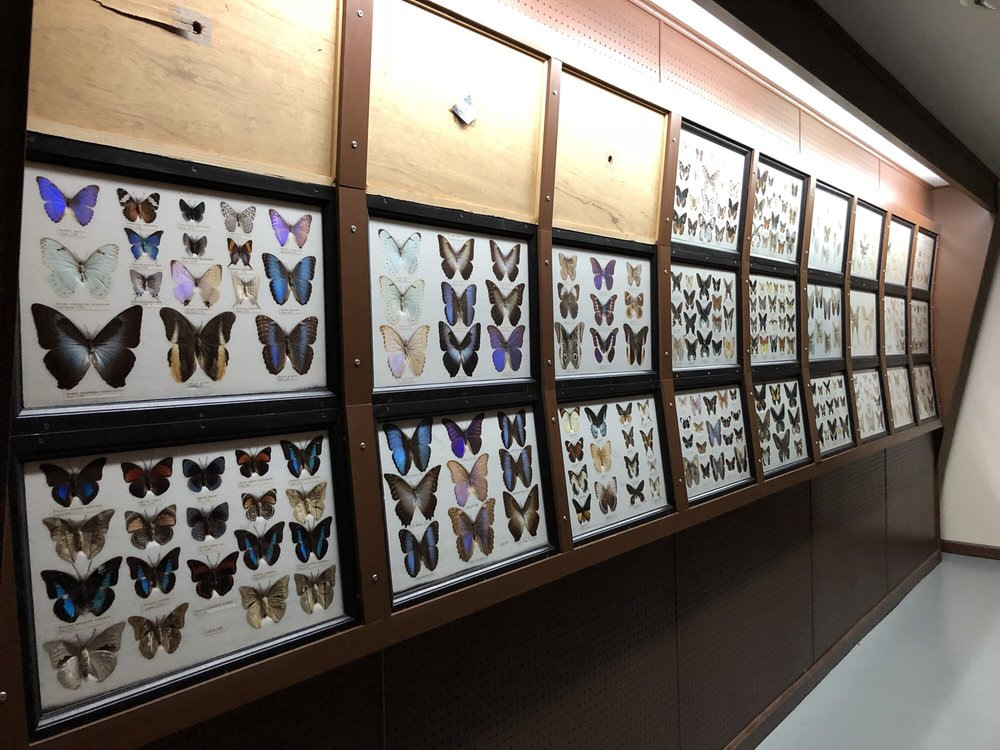 Mammoth Cave Wildlife Museum: 409 E Happy Valley St, Cave City, KY