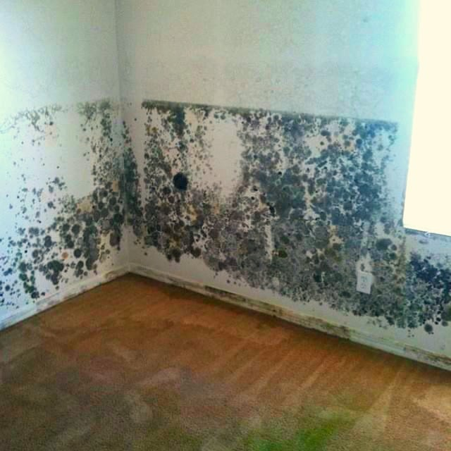 SERVPRO of Chico/Lake Almanor: 775 Entler Ave, Chico, CA